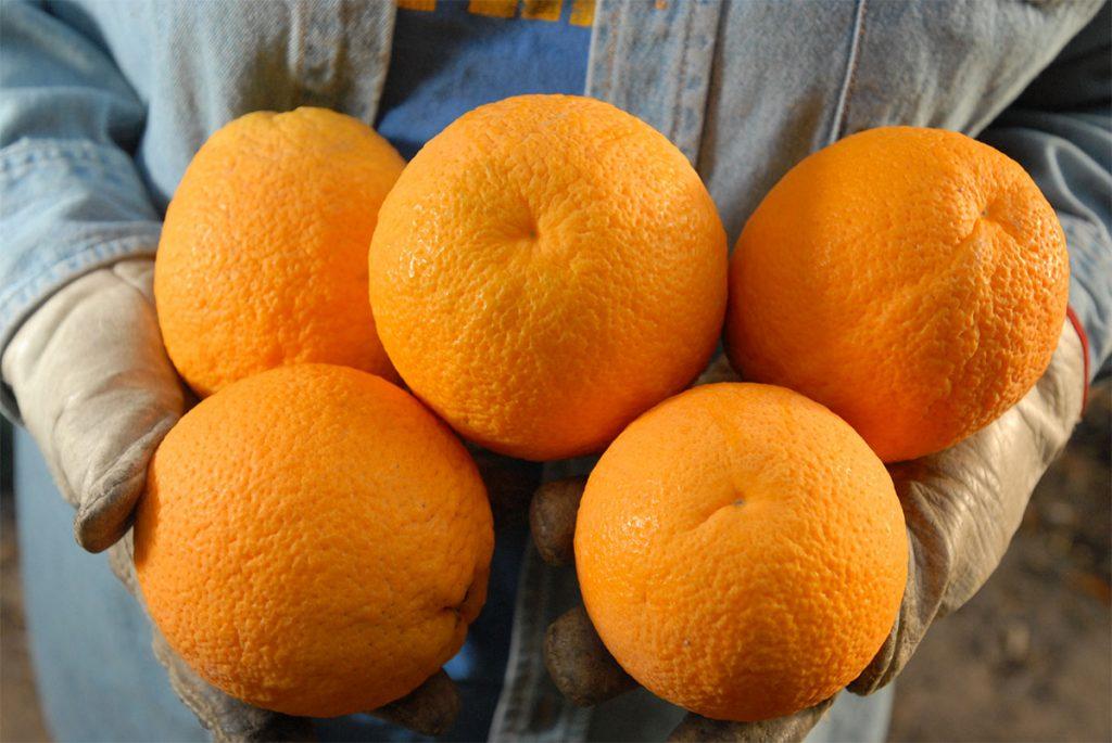 انتخاب بهترین قیمت کلیک ولی پرتقالی